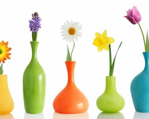 Дата рождения поможет определить ваш цветок счастья