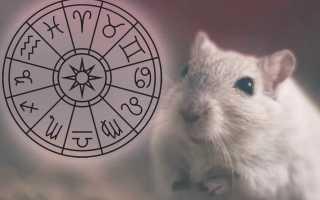 Восточный гороскоп. 5 самых одарённых знаков
