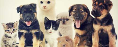 Какое домашнее животное вам подходит?