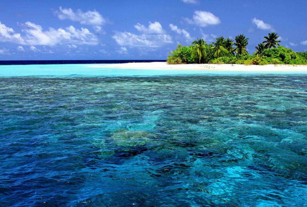 Что сделают знаки зодиака, если окажутся на необитаемом острове?